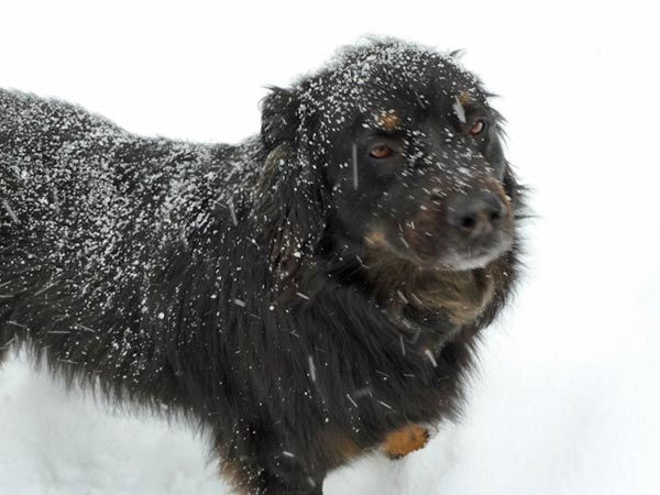 "<div class=""meta ""><span class=""caption-text "">ABC7 viewer Shani Sandler from Trabuco Canyon adopted Sox, a five-year-old shepherd mix, in February 2006. Shani  says this photo shows the dog's first visit to the snow. Celebrate National Puppy Day by sending photos of your pup to ABC7. (KABC Photo/Shani Sandler)</span></div>"