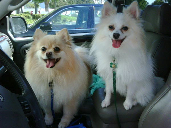 ABC7 viewer Tina Cook from Dove Canyon sent in this photo of Taz and Jack. Celebrate National Puppy Day by  sending photos of your pup to ABC7. <span class=meta>(KABC Photo&#47;Tina Cook)</span>