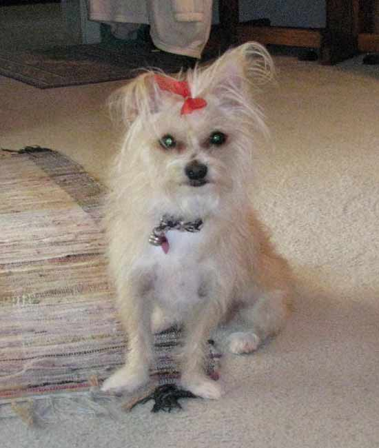 ABC7 viewer Constance Christopher from West Hills adopted Ty in September 2006. Constance said, &#39;she is my little princess!&#39; Celebrate National Puppy Day by sending photos of your pup to ABC7. <span class=meta>(KABC Photo&#47;Constance Christopher)</span>