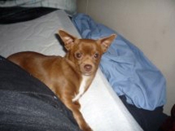 "<div class=""meta ""><span class=""caption-text "">ABC7 viewer Carmen Rae Mewes from Mira Loma sent in this photo of Willy. 'Willy came to me as a stray when he was  only five-months-old,' Carmen said. 'I had just lost my 15-year-old Chihuahua Golden two months prior and Willy has  become my soulmate. He loves me soooo much and I love him!' Celebrate National Puppy Day by sending photos of your pup to ABC7. (KABC Photo/Carmen Rae Mewes)</span></div>"