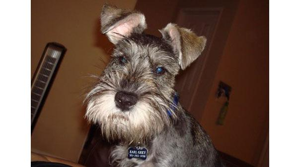 ABC7 viewer Eric Alden of Riverside, Calif., sent in this photo of his dog Earl Grey.