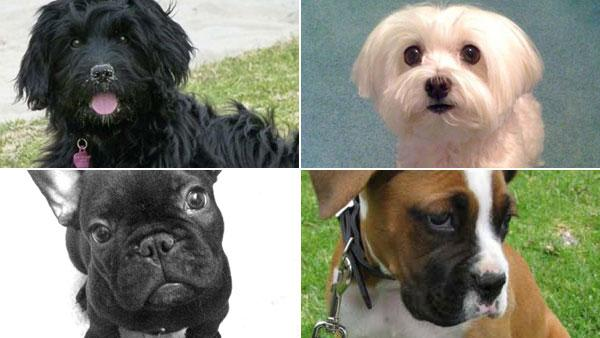 Today is National Puppy Day. Send us pictures of your furry best friend, and see photos others have already sent in!