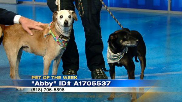 Pets of the Week: Labrador-Terrier mixes