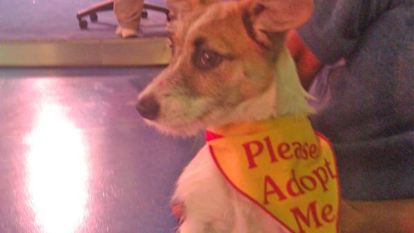 Pet of the Week: 3-month-old Terrier mix Mikey
