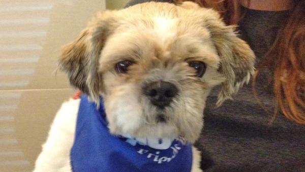 Pet of the Week: Shih Tzu mix named Johann
