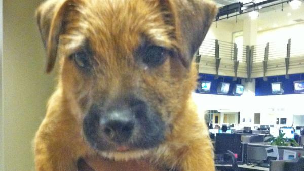 Pet of the Week: 2-month-old Terrier Benji