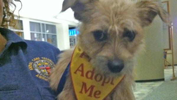 Pet of the Week: Terrier mix named Jack