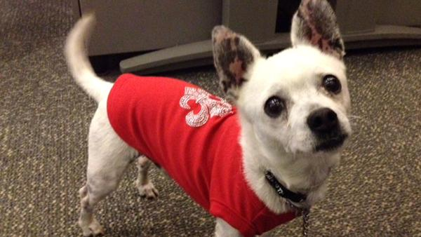 Pet of the Week: Chihuahua mix named Guerito
