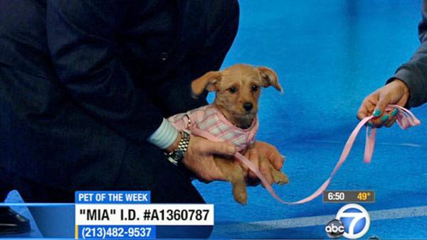 Pet of the Week: Terrier-mix named Mia