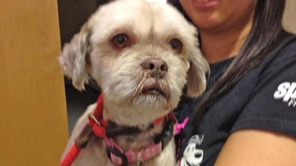 Pet of the Week: 5-year-old Lhassa-mix named Molly