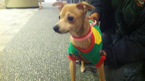 Pet of the Week: Chihuahua-mix named Candace