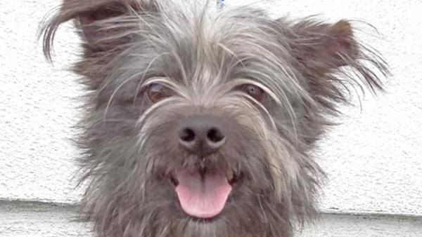 Pet of the Week: Terrier-mix named Louie