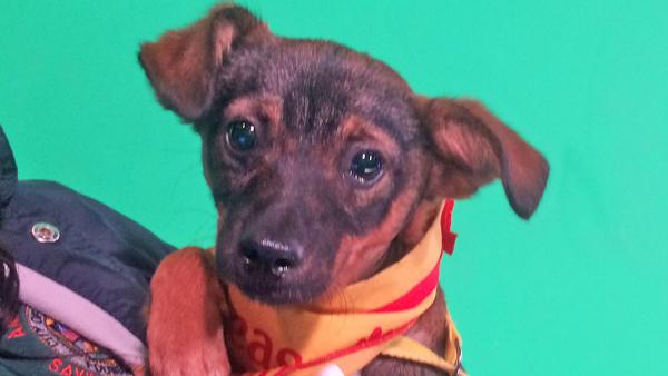 Pet of the Week: Chihuahua mix named Kyle