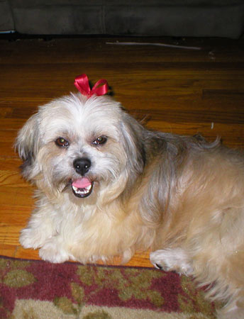 "<div class=""meta ""><span class=""caption-text "">ABC7 viewer Tina Blakeman from Torrance sent in this photo of Eddie. Blakeman says Eddie was adopted in June 2010 and thought he was an old Shih Tzu until he came back from the groomer for the first time. Eddie loves playing with his toys and his new baby kitty pal, Tuffy. Celebrate National Puppy Day by sending photos of your pup to ABC7. (KABC Photo/Tina Blakeman)</span></div>"
