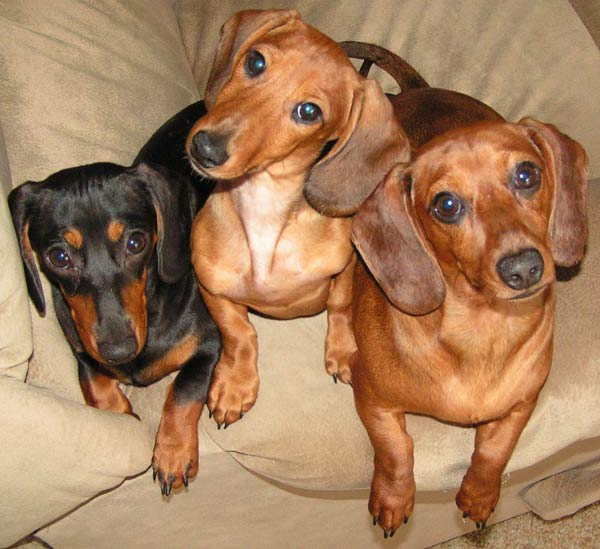 ABC7 viewer Ron Thomas from Cypress sent in this photo of Biscuit, Rocky and Taffy. Celebrate National Puppy Day by sending photos of your pup to ABC7. <span class=meta>(KABC Photo&#47;Ron Thomas)</span>