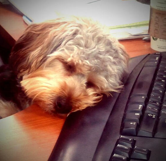 "<div class=""meta ""><span class=""caption-text "">ABC7 viewer Brooke Atkinson from Laguna Niguel sent in this photo of Marlow. Atkinsons says she works at a pet-friendly office and Marlow can often be found sleeping on the job. Marlow is a sweet girl who brings joy and peace to the office! Celebrate National Puppy Day by sending photos of your pup to ABC7. (KABC Photo/Brooke Atkinson)</span></div>"