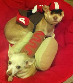 A photo of Octavius and Nemo, adopted by ABC7...