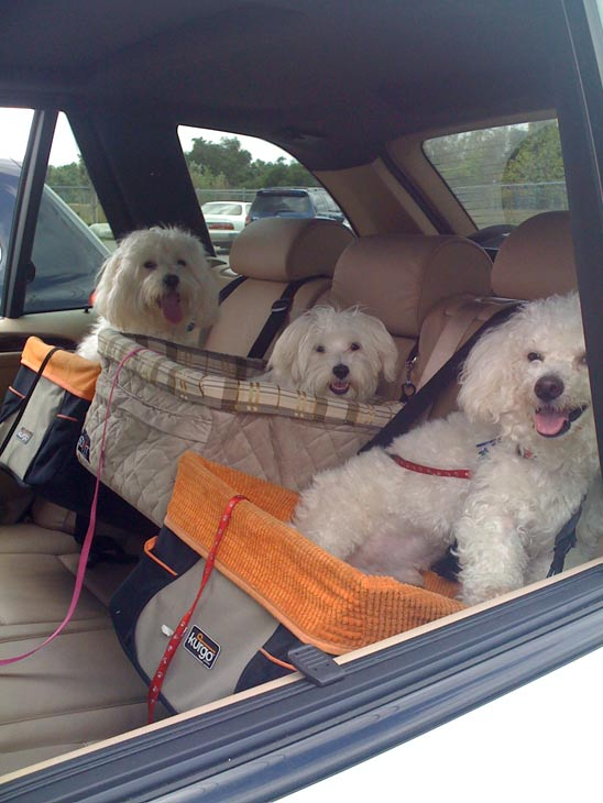 A photo of Pepe Boy, Emma Girl and Yogi Bear,...