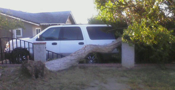 ABC7 viewer Tina Allbecker of Rancho Cucamonga sent in this photo of wind damage on Thursday, Nov. 11, 2010.  When You Witness breaking news, or even something extraordinary, send pictures and video to video@myabc7.com, or send them to @abc7 on Twitter <span class=meta>(ABC7 viewer Tina Allbecker)</span>