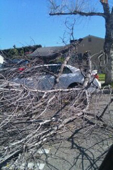 An ABC7 viewer sent in this photo of tree branches in the street in Pomona on Thursday, Nov. 11, 2010.  When You Witness breaking news, or even something extraordinary, send pictures and video to video@myabc7.com, or send them to @abc7 on Twitter <span class=meta>(ABC7 viewer)</span>