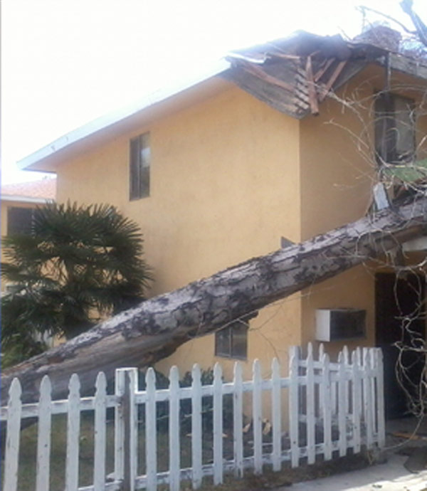 An ABC7 viewer sent in this photo of wind damage...