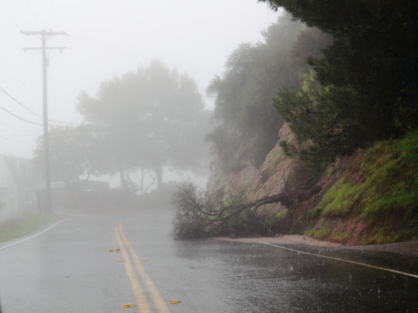 ABC7 viewer Jeffery M. Grossman of Calabasas sent in this photo of a fallen tree on Sunday, Dec. 19, 2010.  When You Witness breaking news, or even something extraordinary, send pictures and video to video@myabc7.com, or send them to @abc7 on Twitter <span class=meta>(ABC7 viewer Jeffery M. Grossman)</span>