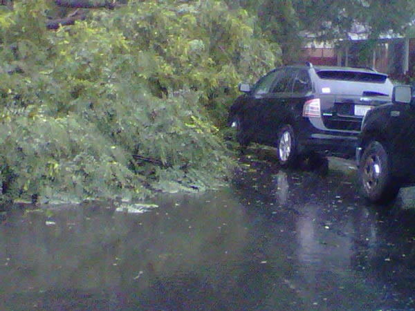 An ABC7 viewer sent in this photo of a tree that fell on top of a car on Colby Avenue in Los Angeles on Sunday, Dec. 19, 2010.  When You Witness breaking news, or even something extraordinary, send pictures and video to video@myabc7.com, or send them to @abc7 on Twitter <span class=meta>(ABC7 viewer)</span>