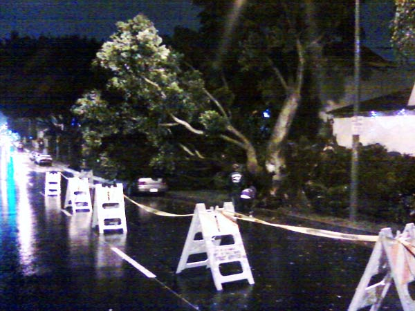 ABC Viewer Rob Sherriff sent in this photo of a tree fallen on Centinela Avenue in West Los Angeles on Monday, Dec. 20, 2010.  When You Witness breaking news, or even something extraordinary, send pictures and video to video@myabc7.com, or send them to @abc7 on Twitter <span class=meta>(ABC Viewer Rob Sherriff)</span>