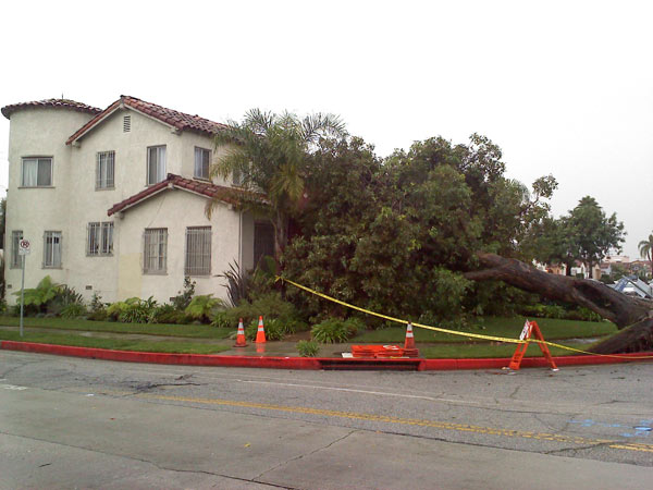ABC7 viewer Sherry Jones of Los Angeles sent in this photo of a tree that fell on a Spanish-style home on Monday, Dec. 20, 2010.  When You Witness breaking news, or even something extraordinary, send pictures and video to video@myabc7.com, or send them to @abc7 on Twitter <span class=meta>(ABC7 viewer Sherry Jones)</span>