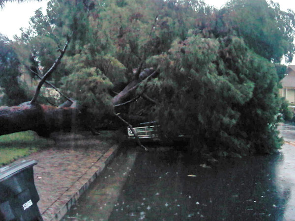 ABC7 viewer Quinn Shurian sent in this photo of a fallen tree in Orange on Monday, Dec. 20, 2010.  When You Witness breaking news, or even something extraordinary, send pictures and video to video@myabc7.com, or send them to @abc7 on Twitter <span class=meta>(ABC7 viewer Quinn Shurian)</span>