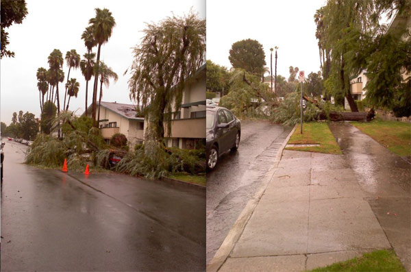 ABC7 viewer Candace Escobar sent in this photo of a fallen tree on Murietta Avenue in Sherman Oaks on Monday, Dec. 20, 2010.   When You Witness breaking news, or even something extraordinary, send pictures and video to video@myabc7.com, or send them to @abc7 on Twitter <span class=meta>(ABC7 viewer Candace Escobar)</span>