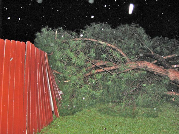 "<div class=""meta image-caption""><div class=""origin-logo origin-image ""><span></span></div><span class=""caption-text"">ABC7 viewer Claudia Kilby sent in this photo of a fallen tree in Corona on Tuesday, Dec. 21, 2010. She says the tree blocked their front door and neighbors had to shout to wake them up.   When You Witness breaking news, or even something extraordinary, send pictures and video to video@myabc7.com, or send them to @abc7 on Twitter (ABC7 viewer Claudia Kilby)</span></div>"