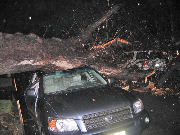 ABC7 viewer Daniel Miley sent in this photo of a tree that fell onto a car at Clark Avenue and Conant Street in Long Beach on Monday, Dec. 20, 2010.   When You Witness breaking news, or even something extraordinary, send pictures and video to video@myabc7.com, or send them to @abc7 on Twitter <span class=meta>(ABC7 viewer Daniel Miley)</span>