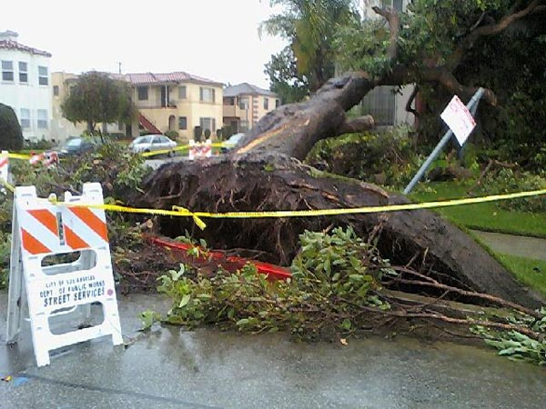 An ABC7 viewer sent in this photo of a fallen tree on Tuesday, Dec. 21, 2010.  When You Witness breaking news, or even something extraordinary, send pictures and video to video@myabc7.com, or send them to @abc7 on Twitter <span class=meta>(ABC7 viewer)</span>