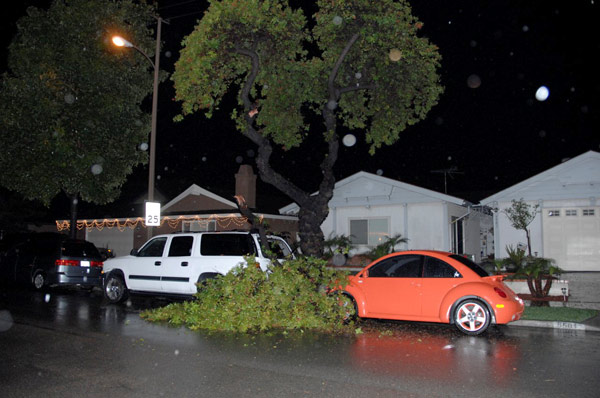 An ABC7 viewer sent in this photo of a tree that fell on two vehicles in Garden Grove on Tuesday, Dec. 21, 2010.  When You Witness breaking news, or even something extraordinary, send pictures and video to video@myabc7.com, or send them to @abc7 on Twitter <span class=meta>(ABC7 viewer)</span>