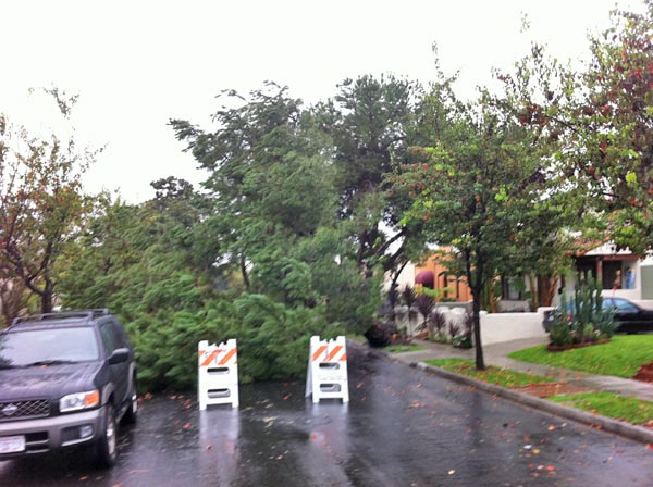 ABC7 viewer John Squatritto sent in this photo of a tree down on Irving Boulevard between Clinton Street and Rosewood Avenue in Hollywood on Tuesday, Dec. 21, 2010.   When You Witness breaking news, or even something extraordinary, send pictures and video to video@myabc7.com, or send them to @abc7 on Twitter <span class=meta>(ABC7 viewer John Squatritto)</span>