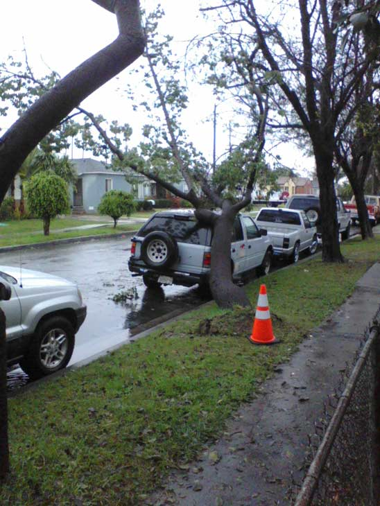ABC7 viewer Jack Engberg sent in this photo of a fallen tree on a vehicle in Long Beach on Tuesday, Dec. 21, 2010.  When You Witness breaking news, or even something extraordinary, send pictures and video to video@myabc7.com, or send them to @abc7 on Twitter <span class=meta>(ABC7 viewer Jack Engberg)</span>