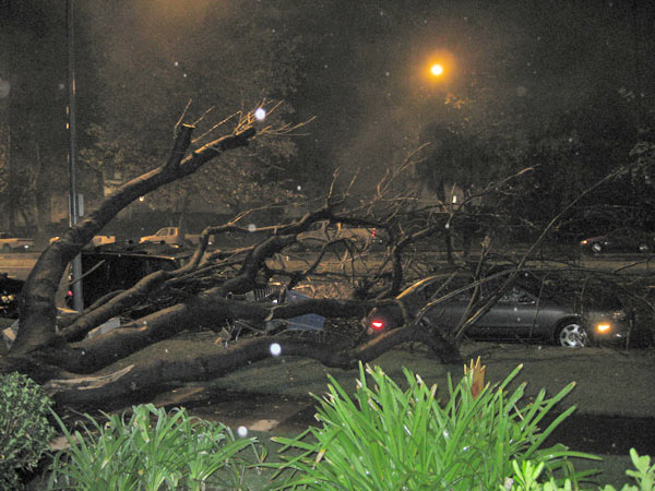 ABC7 viewer CK Malloy sent in this photo of a downed tree on Sherman Way in Reseda on Tuesday, Dec. 21, 2010.   When You Witness breaking news, or even something extraordinary, send pictures and video to video@myabc7.com, or send them to @abc7 on Twitter <span class=meta>(ABC7 viewer CK Malloy)</span>