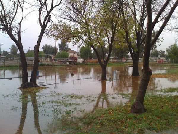 ABC7 viewer Michaela Wagnon sent in this photo of flooding in Sun City on Tuesday, Dec. 21, 2010.   When You Witness breaking news, or even something extraordinary, send pictures and video to video@myabc7.com, or send them to @abc7 on Twitter <span class=meta>(ABC7 viewer Michaela Wagnon)</span>