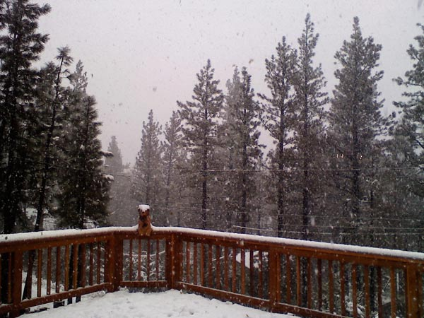 ABC7 viewer Adrianna Magallanes sent in this photo of snow in Big Bear City on Wednesday, Dec. 22, 2010.  When You Witness breaking news, or even something extraordinary, send pictures and video to video@myabc7.com, or send them to @abc7 on Twitter <span class=meta>(ABC7 viewer Adrianna Magallanes)</span>