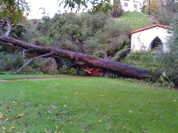ABC7 viewer Daniel Blood sent in this photo of an uprooted tree in San Bernardino on Wednesday, Dec. 22, 2010.   When You Witness breaking news, or even something extraordinary, send pictures and video to video@myabc7.com, or send them to @abc7 on Twitter <span class=meta>(ABC7 viewer Daniel Blood)</span>