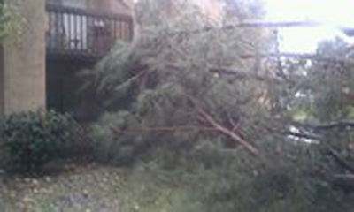 ABC7 viewer Louis Montero sent in this photo of a fallen tree in San Dimas on Wednesday, Dec. 22, 2010.   When You Witness breaking news, or even something extraordinary, send pictures and video to video@myabc7.com, or send them to @abc7 on Twitter <span class=meta>(ABC7 viewer Louis Montero)</span>