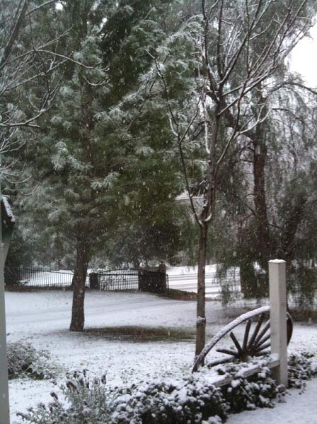 ABC7 viewers Chris and Linda Yewdall sent in this photo of snow in Sleepy Valley, Calif. on Sunday Jan. 2, 2011.  When You Witness breaking news, or even something extraordinary, send pictures and video to video@myabc7.com, or send them to @abc7 on Twitter <span class=meta>(ABC7 viewers Chris and Linda Yewdall)</span>