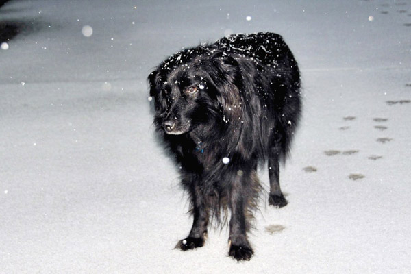 ABC7 viewer Lynda Hill sent in this photo of a dog standing in the snow in Newhall, Calif. on Sunday Jan. 2, 2011.  When You Witness breaking news, or even something extraordinary, send pictures and video to video@myabc7.com, or send them to @abc7 on Twitter <span class=meta>(ABC7 viewer Lynda Hill)</span>
