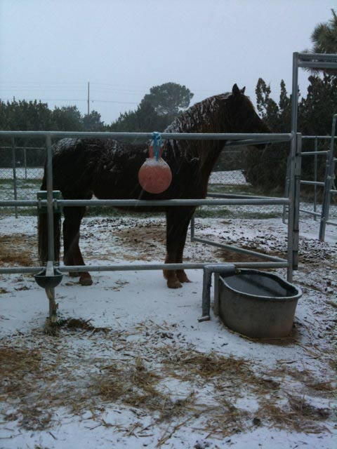 ABC7 viewer Kristin from Palmdale, Calif. sent in this photo of a horse standing in the snow on Sunday Jan. 2, 2011.  When You Witness breaking news, or even something extraordinary, send pictures and video to video@myabc7.com, or send them to @abc7 on Twitter <span class=meta>(ABC7 viewer Kristin)</span>