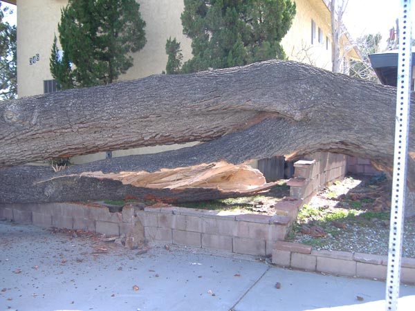 "<div class=""meta image-caption""><div class=""origin-logo origin-image ""><span></span></div><span class=""caption-text"">ABC7 viewer Victor Clarke sent in this photo of 150-year-old tree that fell over in Lancaster on Saturday, Feb. 19, 2011.  When You Witness breaking news, or even something extraordinary, send pictures and video to video@myabc7.com, or send them to @abc7 on Twitter (KABC photo/Willie Jordan)</span></div>"