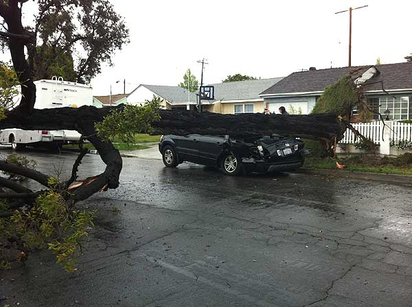ABC7 viewer David Guzman sent in this photo of a tree that crashed down on a car in Long Beach, Calif., on Sunday March 20, 2011.  When You Witness breaking news, or even something extraordinary, send pictures and video to video@myabc7.com, or send them to @abc7 on Twitter <span class=meta>(KABC photo&#47; David Guzman)</span>
