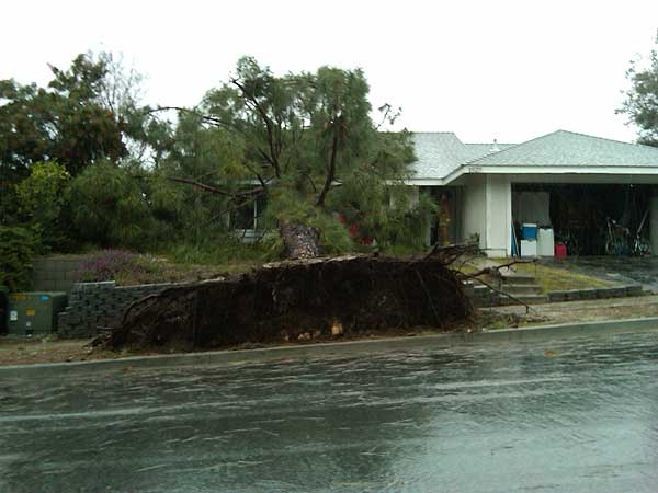ABC7 viewer Diana Hayden of Thousand Oaks, Calif.,  sent in this photo of a fallen tree on Sunday March 20, 2011.  When You Witness breaking news, or even something extraordinary, send pictures and video to video@myabc7.com, or send them to @abc7 on Twitter  <span class=meta>(KABC photo &#47; Diana Hayden)</span>
