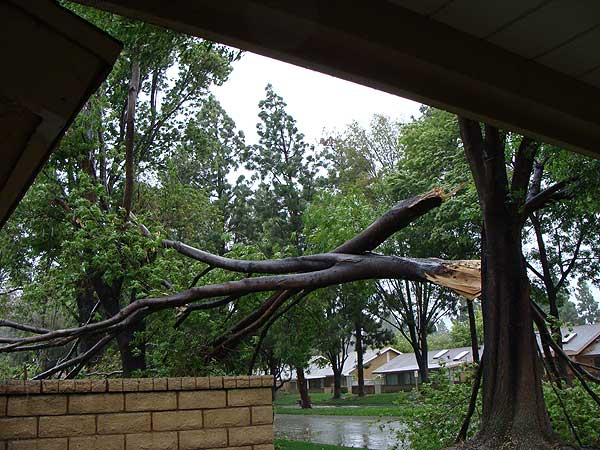 ABC7 viewer Marvin B. sent in this photo of a fallen tree in Camarillo, Calif., on Sunday March 20, 2011.  When You Witness breaking news, or even something extraordinary, send pictures and video to video@myabc7.com, or send them to @abc7 on Twitter <span class=meta>(KABC photo &#47; Marvin B.)</span>