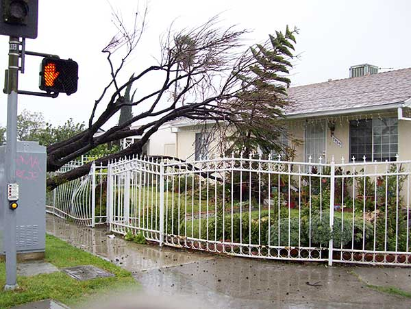 ABC7 viewer Michael sent in this photo of a fallen tree in Panorama City, Calif., on Sunday March 20, 2011.  When You Witness breaking news, or even something extraordinary, send pictures and video to video@myabc7.com, or send them to @abc7 on Twitter <span class=meta>(KABC photo &#47; Michael)</span>